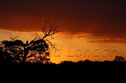 sunset rain86