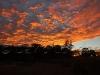 sunrise vineyard17