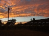 sunrise vineyard24