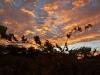 sunrise vineyard27