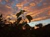 sunrise vineyard28