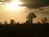 sunset-bottle-tree04