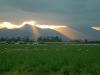 sunset cane70