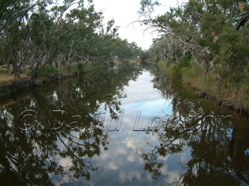 Dimboola-river11