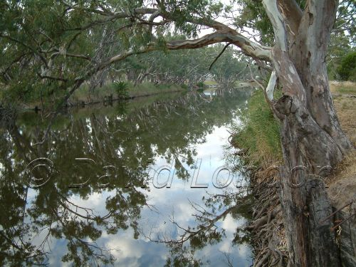 Murray river13