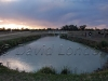 sunset irrigation74