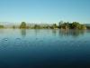 Tweed river37